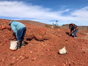 In the field digging for rocks