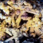 Chalcocite in stalactite form