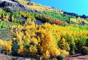 Colorado Aspen mountain view