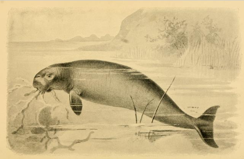 AncientSeaCow