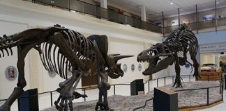 Museum Texas Tech display