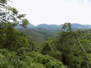 Jungle of Sulawesi