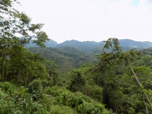 Jungle of Sulawesi