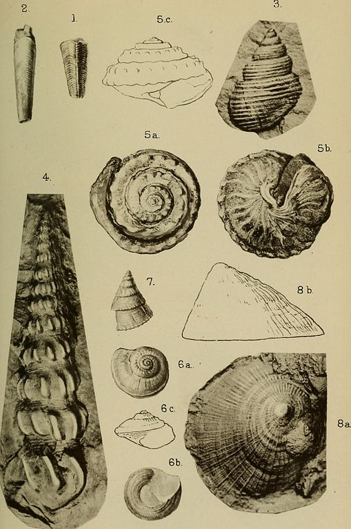 Triassic Cephalopoda page