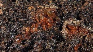 Olivin from Mauna Loa