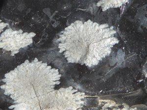 Cristobalite spherules