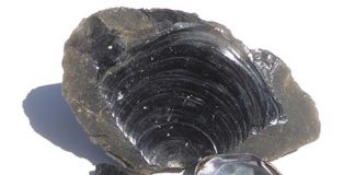 Conchoidal fracture in obsidian resembles