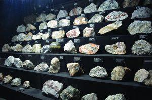 specimen display