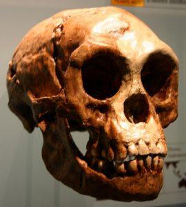Skull of the Hobbit