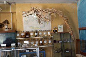 Fossil skeletons