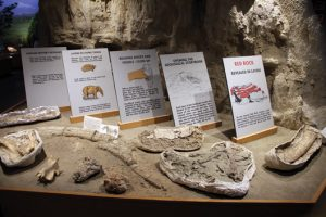 Educational display at California's Red Rock Canyon State Park