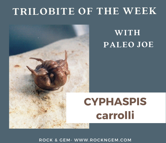 Trilobite of Week