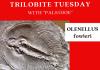 Trilobite of Week logo