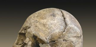 Mesolithic era skull